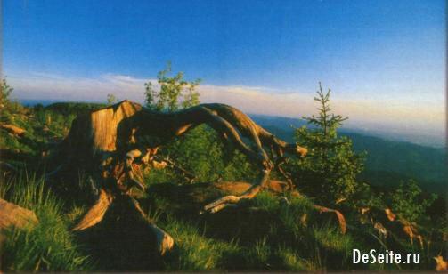 Schwarzwaldlandschaft mit Wurzelhölzern