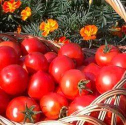 Praktische Erfahrungen in der Landwirtschaft