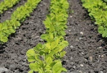 in der Landwirtschaft