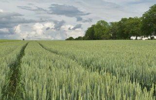 Лексика немецкого языка по теме Das Fachpraktikum in der Landwirtschaft - Профессиональная практика в сельском хозяйстве