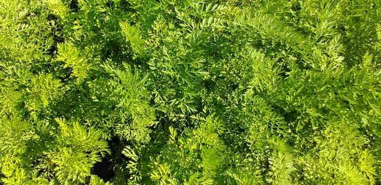 Bioland - Органическое земледелие