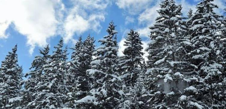 диалог о каникулах на немецком языке, Летний или зимний отдых?