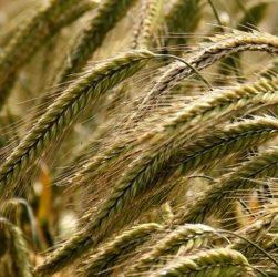 опыт в сельском хозяйстве на немецком языке